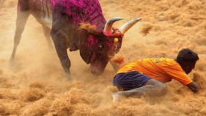 Bull Taming Article_Shyam